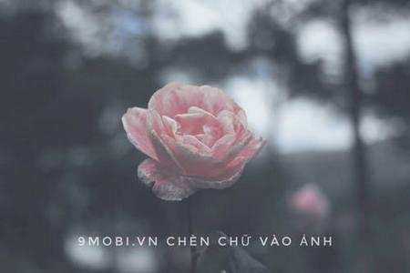 cach chen chu vao anh tren dien thoai